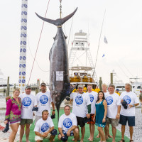 "1st Place Blue Marlin | Photo by <a href=""http://www.mgcbcphotos.com/alariclambert/alaricLambert/Home.html"" target=""_blank""> Alaric Lambert</a>"